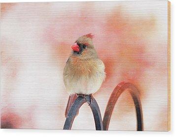 Pretty Cardinal Wood Print