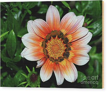 Wood Print featuring the photograph Pretty Gazania By Kaye Menner by Kaye Menner