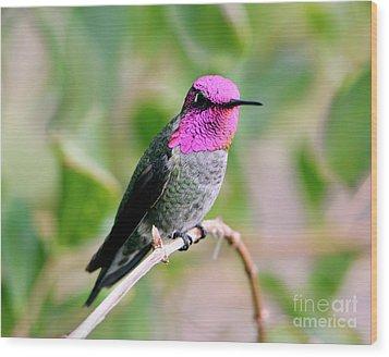 Pretty In Pink Anna's Hummingbird Wood Print