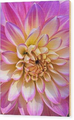 Pretty In Pink Dahlia Wood Print by Kathy Yates