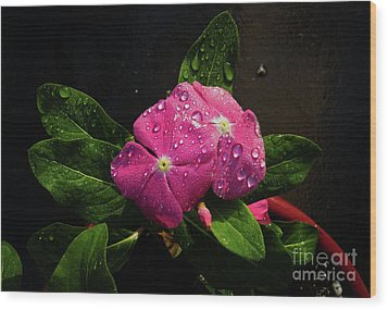 Wood Print featuring the photograph Pretty In Pink by Douglas Stucky