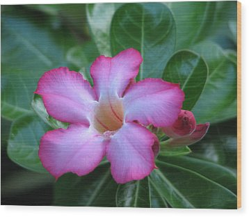 Pretty In Pink Wood Print by Ginger Howland