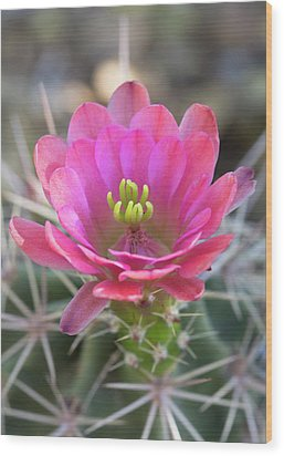 Wood Print featuring the photograph Pretty In Pink Hedgehog  by Saija Lehtonen