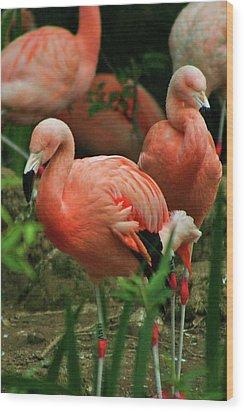 Pretty In Pink Wood Print by Martina Fagan