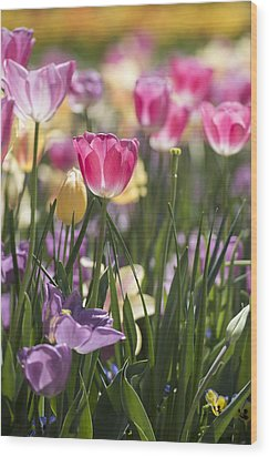 Pretty In Pink Tulips Wood Print