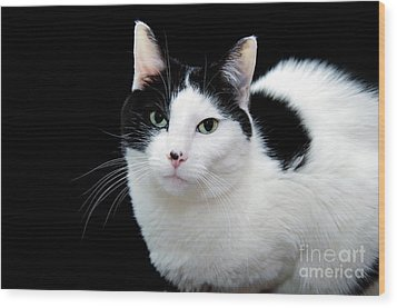 Pretty Kitty Cat 1 Wood Print by Andee Design