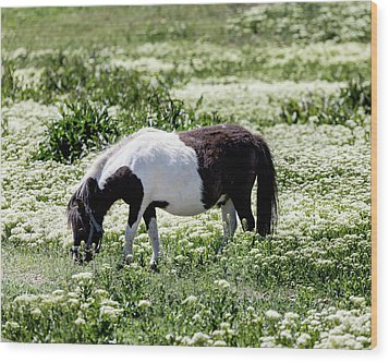 Pretty Painted Pony Wood Print by James BO Insogna