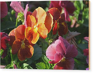 Pretty Pansies Wood Print by Andrea Jean