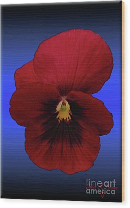 Wood Print featuring the photograph Pretty Pansy by Donna Brown