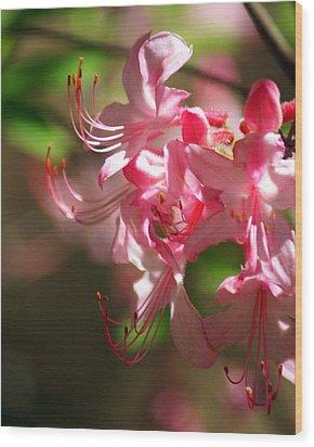 Pretty Pink Wood Print by Marty Koch