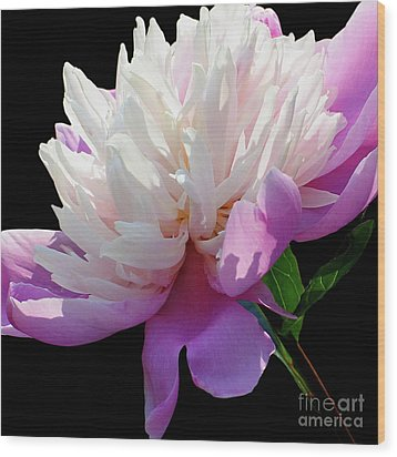 Pretty Pink Peony Flower Wall Art Wood Print