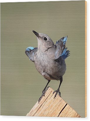 Pretty Pose Wood Print by Shane Bechler