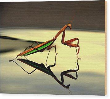 Preying Mantis Wood Print by Aron Chervin