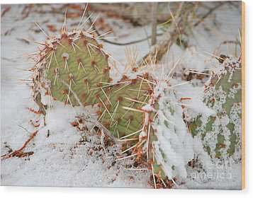 Wood Print featuring the photograph Prickley Pear Cactus by Donna Greene