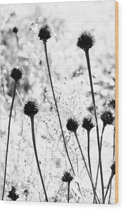 Wood Print featuring the photograph Prickly Buds by Deborah  Crew-Johnson