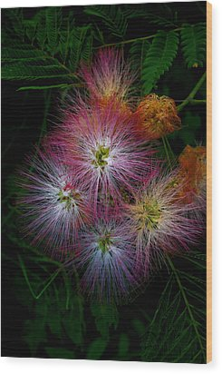Prickly Flower Wood Print by Christopher Lugenbeal