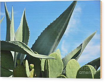 Wood Print featuring the photograph Prickly Pear Cactus And Century Plant by Ray Shrewsberry