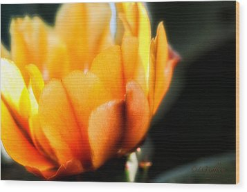Wood Print featuring the photograph Prickly Pear Flower by Lynn Geoffroy