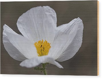 Prickly Poppy Wood Print by Laura Pratt