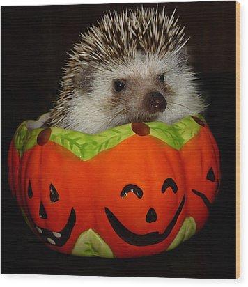 Prickly Pumpkin Wood Print