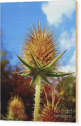 Wood Print featuring the photograph Prickly Thistle by Nina Ficur Feenan