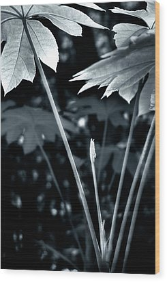 Wood Print featuring the photograph Primordial by Kevin Bergen