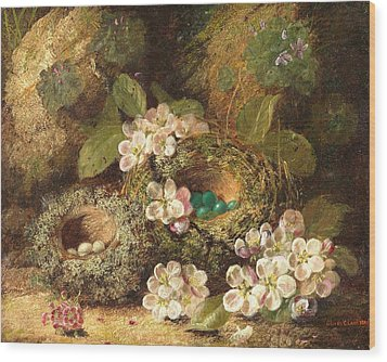 Primroses And Bird's Nests On A Mossy Bank Wood Print by Oliver Clare