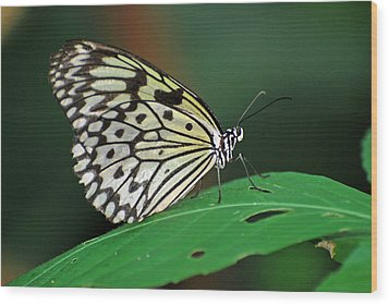Wood Print featuring the photograph Prince Of The Flower  by Teresa Blanton