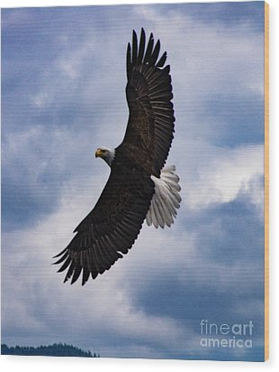 Prince Rupert Soaring Eagle Wood Print