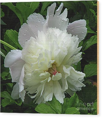 Pristine Peony Wood Print by Deborah Johnson