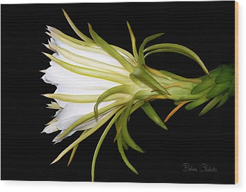 Profile Night Blooming Cereus Wood Print by Barbara Chichester