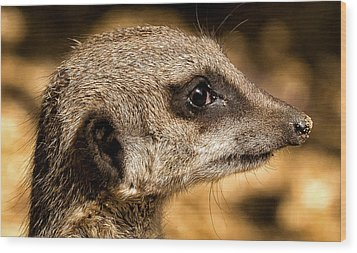 Wood Print featuring the photograph Profile Of A Meerkat by Chris Boulton