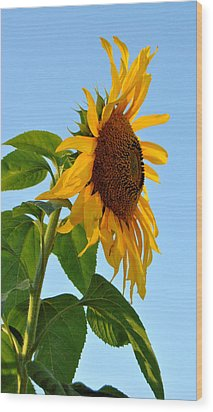 Profile Of A Sunflower Wood Print by Kathleen Sartoris