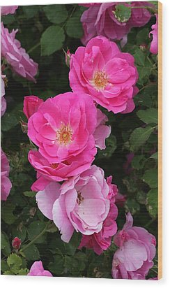 Wood Print featuring the photograph Profusion Of Pink by Doris Potter