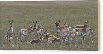 Wood Print featuring the photograph Pronghorns On Alert by Kae Cheatham