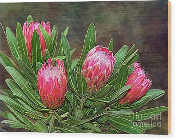 Wood Print featuring the photograph Proteas In Bloom By Kaye Menner by Kaye Menner