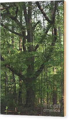 Wood Print featuring the photograph Protecting The Children by Skip Willits