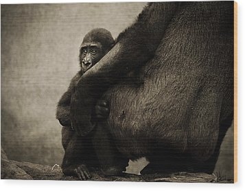 Protection Wood Print by Animus  Photography