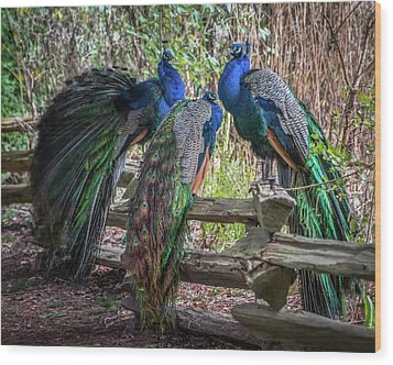 Proud As Three Peacocks Wood Print