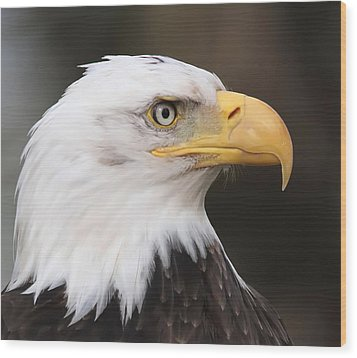 Proud Eagle Wood Print by Angie Vogel