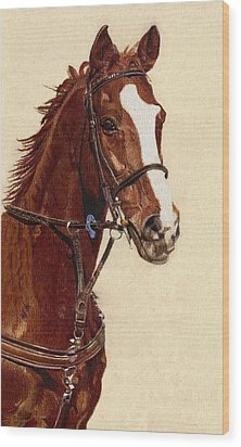 Proud - Portrait Of A Thoroughbred Horse Wood Print by Patricia Barmatz