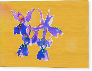 Orange Provence Orchid  Wood Print