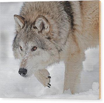 Prowling Wolf Wood Print