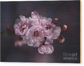 Prunus A Pink Spring Wood Print