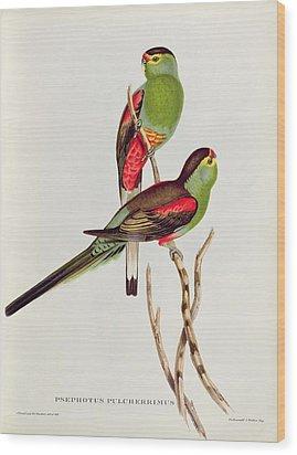 Psephotus Pulcherrimus Wood Print by John Gould