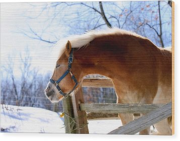 Wood Print featuring the photograph Pssssssh.....it's Not Cold by Angela Rath