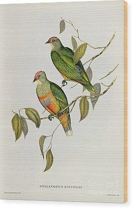 Ptilinopus Ewingii Wood Print by John Gould
