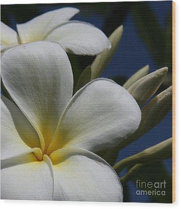 Pua Lena Pua Lei Aloha Tropical Plumeria Maui Hawaii Wood Print by Sharon Mau