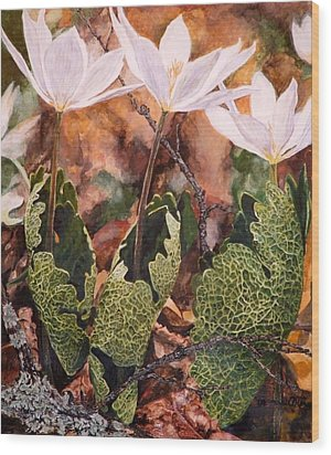 Puccoon Wood Print by Thomas Akers