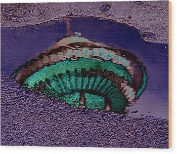 Puddle Needle Wood Print by Tim Allen